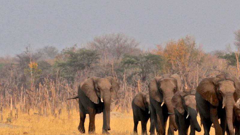 Ultimate Hwange, Victoria Falls & Chobe