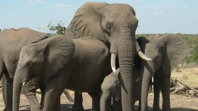 Elephant Art in Victoria Falls